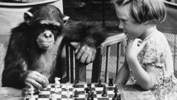 monkey playing chess Why Games Suck   Its Human Nature